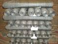 六角防护网 4