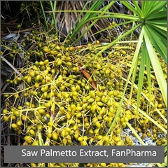 Saw Palmetto Extract 25% Fatty Acid