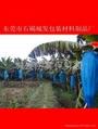 湖南香蕉两头通浅蓝色包装胶袋 2