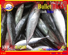 FROZEN WHOLE ROUND BULLET TUNA