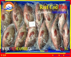 FROZEN WHOLE ROUND REEF COD
