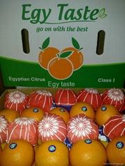 Fresh Egyptian Valencia by Fruit Link