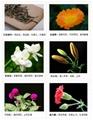 2014 gifts new blooming tea flowering tea 5
