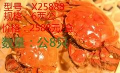昆山九沐森阳澄湖大闸蟹X25888