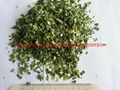 AD Chinese Spices Xinghua Leek Green and