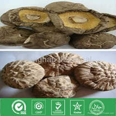 dried edible Shiitake mushroom
