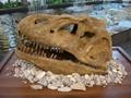 恐龙化石出租模型展示