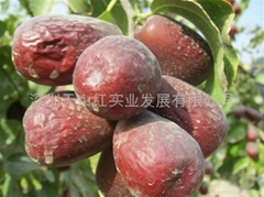 新疆红枣(骏枣)