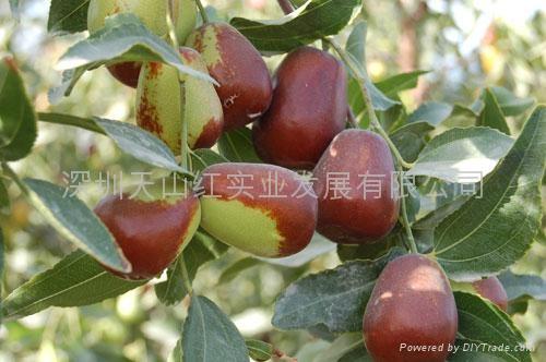 Chinese dates(Jun-jujube) 5