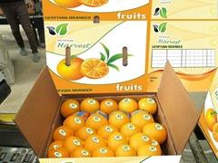 Egyptiam Fresh Navel Orange
