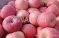 apple fuji 1