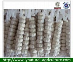 Best seller Pure White Fresh Garlic 2013 Crop