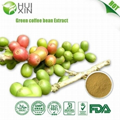 Green coffee bean Extract 30%,40%.50%