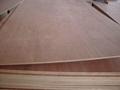 Red Cedar Plywood