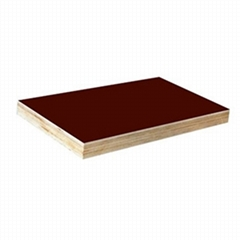 Black Film Faced Plywood/Shuttering Plywood/Concrete Plywood