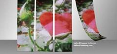 P9mm Factory wholesale Galaxias Flexible LED Curtain