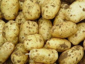 Fresh Potato 3