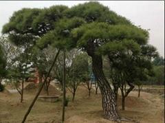artificial pine tree