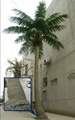 Wholesale high quanlity  artificial fake coconut tree for decoration outdoor 5
