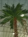 2014 Artificial Washington palm tree fake palm decorate outdoor plant  4