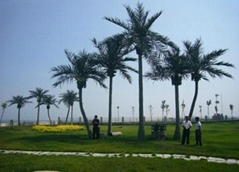 Wholesale high quanlity  artificial fake coconut tree for decoration outdoor