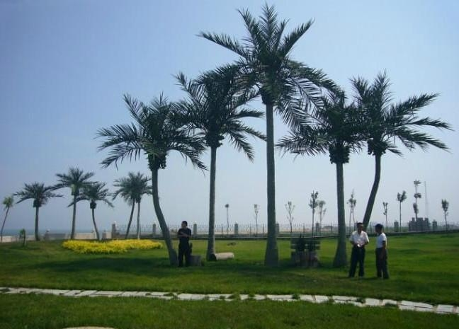 Wholesale high quanlity  artificial fake coconut tree for decoration outdoor 1