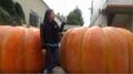 Artificial big Pumpkin for Decoration Thanksgiving gift halloween gift  5