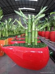 Lucky Bamboo Combination