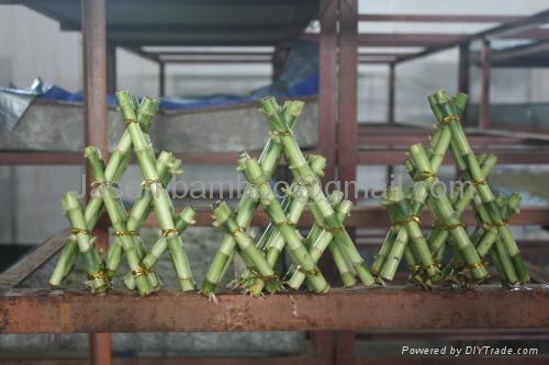 Lucky Bamboo -- Pyramid  2
