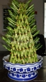 Lucky Bamboo -- Pyramid  5