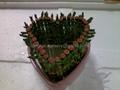Lucky bamboo Heart Tower  2