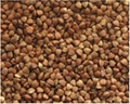 Roasted buckwheat kernels 1