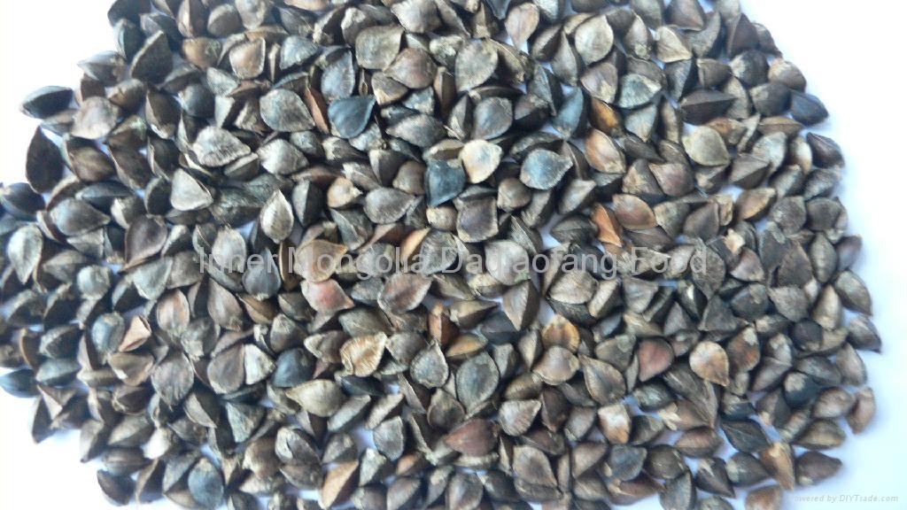 Raw buckwheat 3