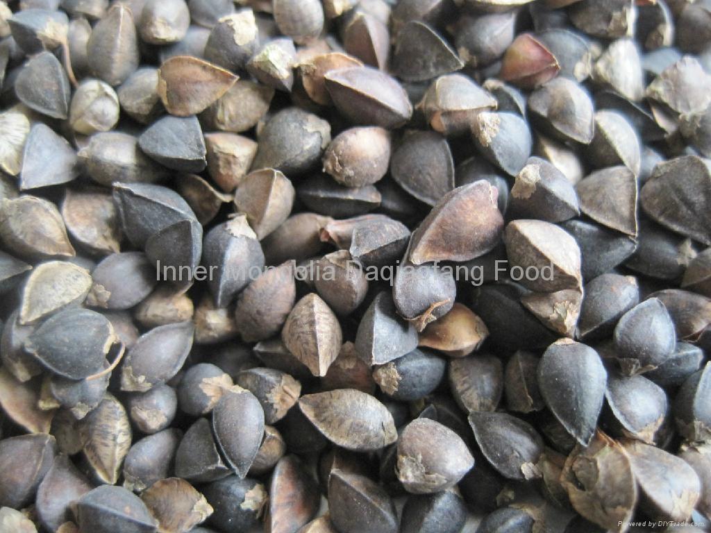Raw buckwheat 4