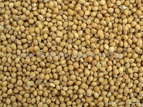 Yellow millet Groats 3