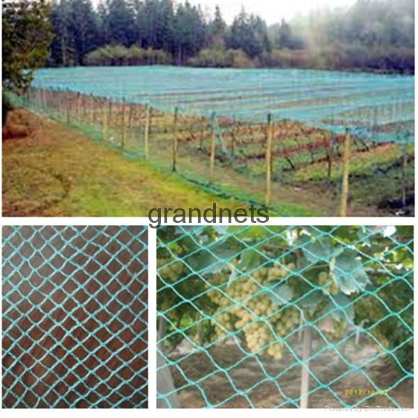 bird nets for catching birds 3