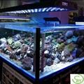 led aquarium light(Remote,Dimming,Timing and Temperature control) 3