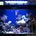 165W led aquarium light(Manual Dimming) 4