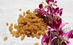 Dark Brown Raisins exporter india