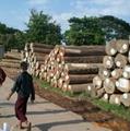 天然耐水耐腐缅甸柚木原材 2