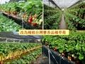 太陽能蔬菜大棚 1