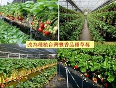 太陽能蔬菜大棚