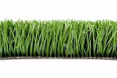 Hot sale indoor natural grass soccer field