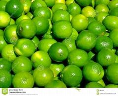 Vietnam Fresh Lime