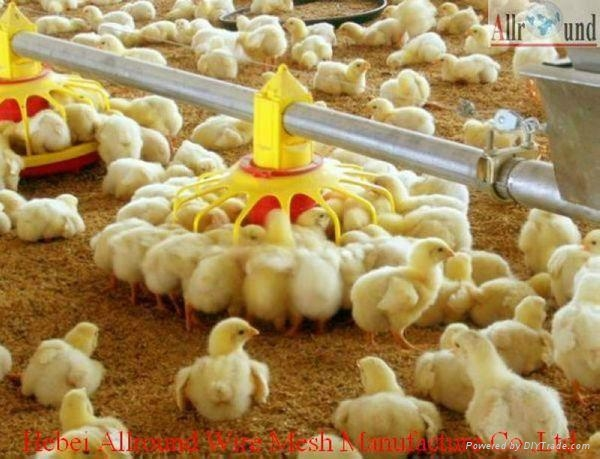 Automatic Broiler Poultry Farm Equipment Allround China