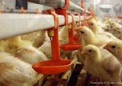 Chicken cage metal drinker