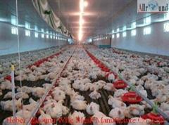 Automatic Broiler Poultry Farm Equipment