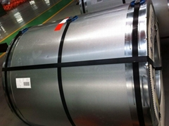 Galvainzed steel coil