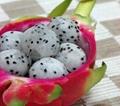 dragon fruits 2