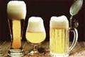 精英型啤酒 5